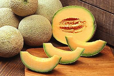Cómo sembrar melón