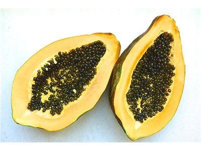 como cultivar papaya maradol