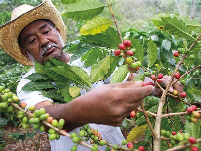 Cómo cultivar café