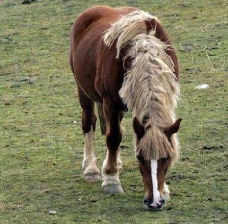 crianza de los caballos