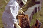 Como criar abejas para producir miel | consejos y cuidados