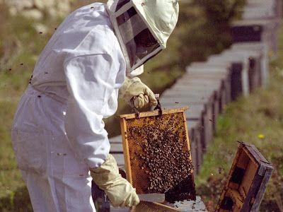 Como criar abejas