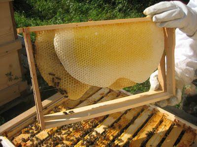 como criar abejas para miel