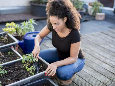como plantar tomates cherry en casa