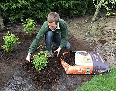 como plantar bambu en casa