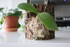 sembrar orquideas en troncos
