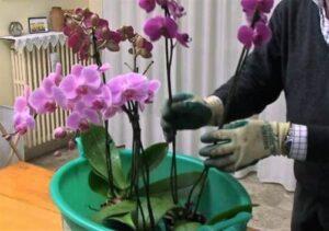 Cómo sembrar y cultivar orquídeas: Guía básica definitiva