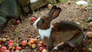 Cómo criar conejos | Guía Básica